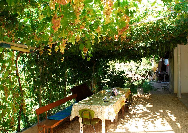 Беседка из винограда своими руками фото